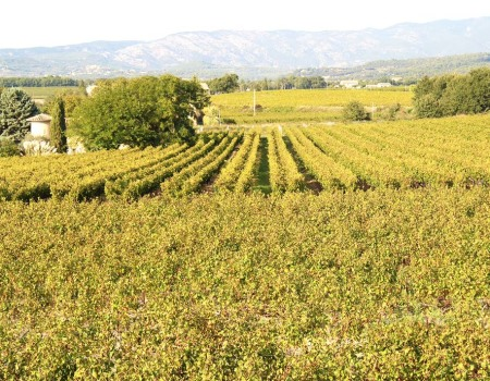 Vineyard Front