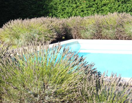 Pool Florals